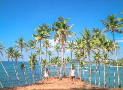 Palm-tree-grove-Mirissa