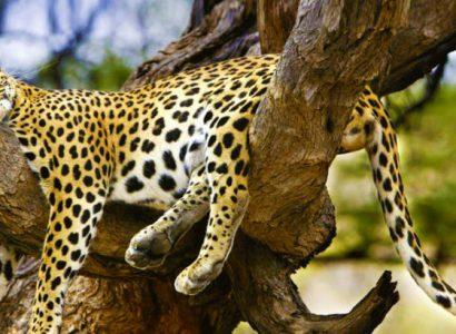 wildlife-srilanka-730x410